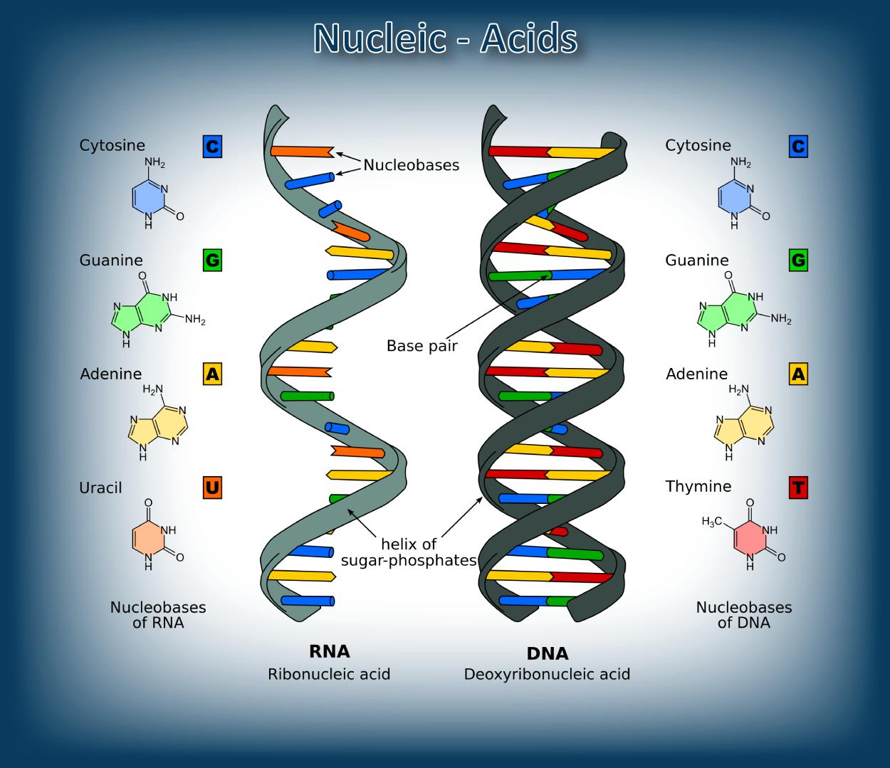 nucleic-acids-05